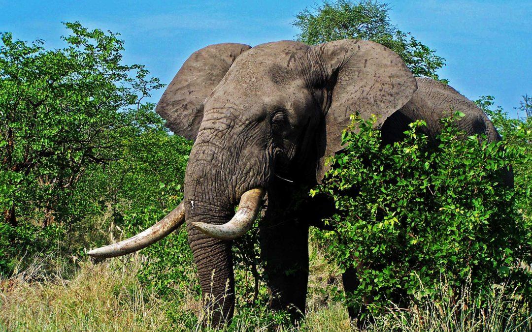 Custom hunting safaris in South Africa