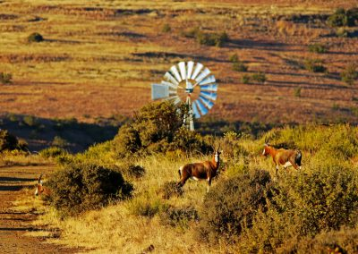 Hunting in the Free State open plains