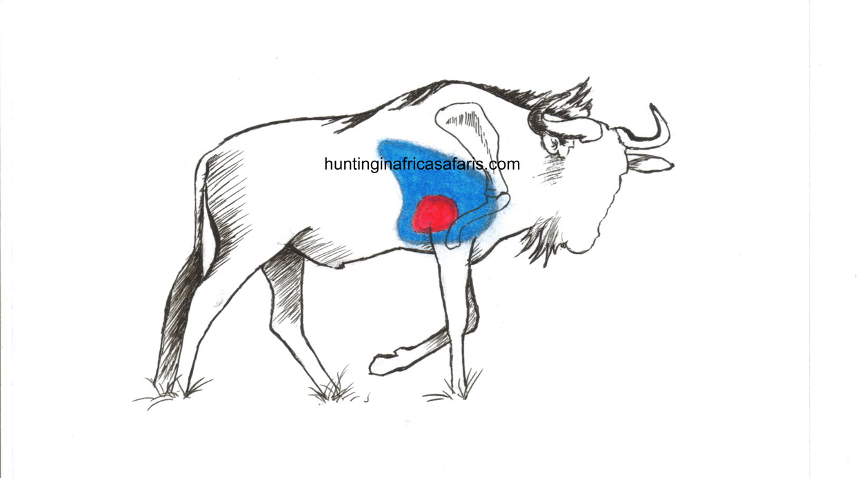 Bow hunting blue wildebeest shot placement diagram South Africa