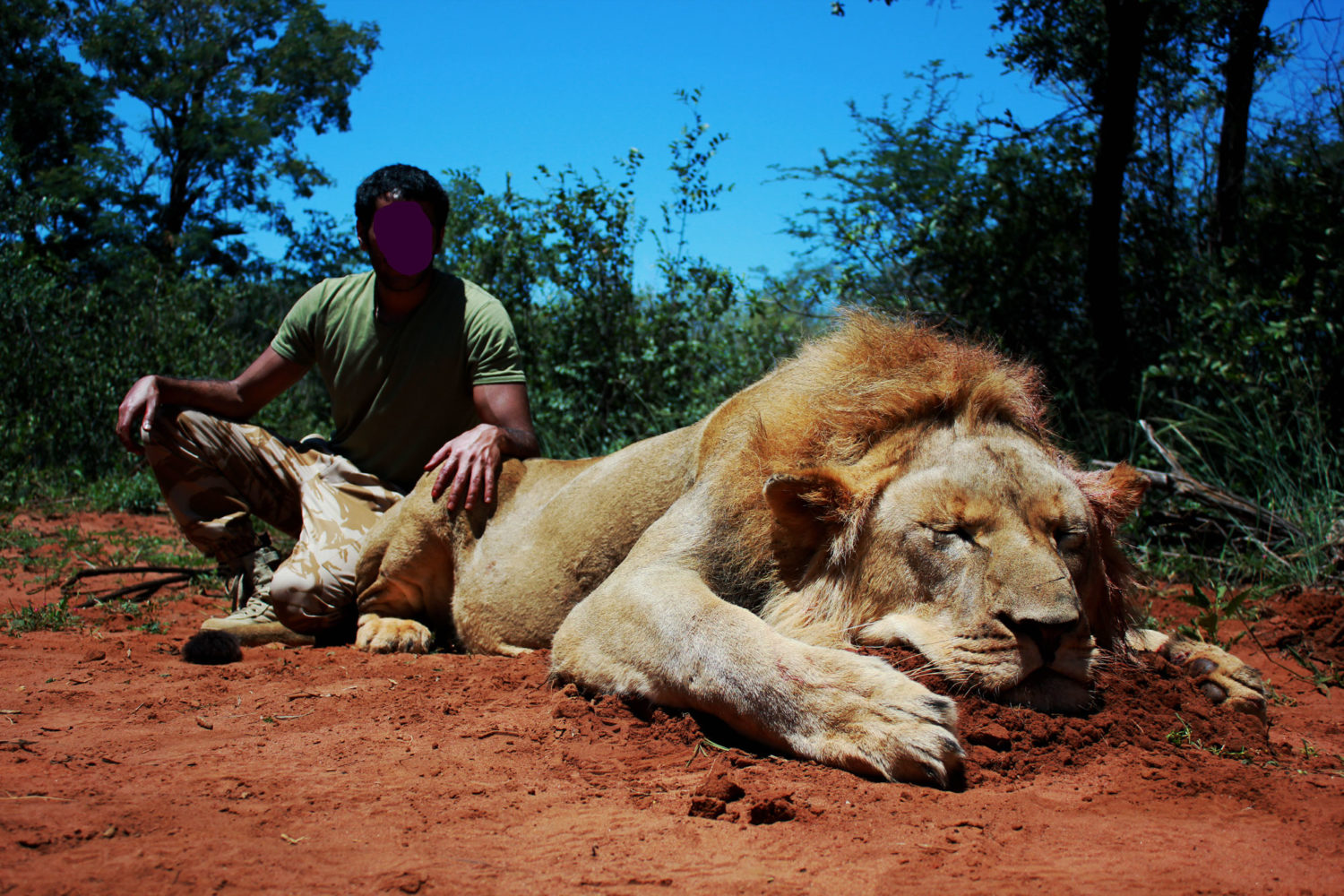 African lion hunting safari packages