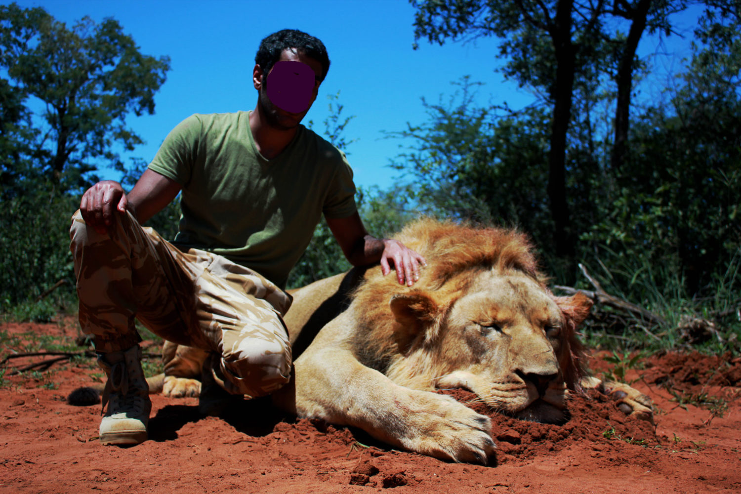 Hunting category 1 lions in South Africa