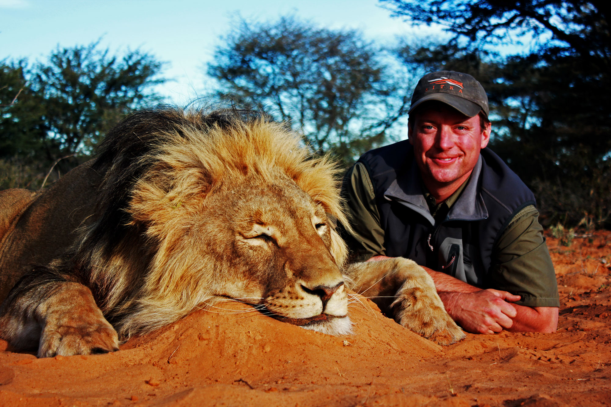 Hunting category 2 lions in South Africa
