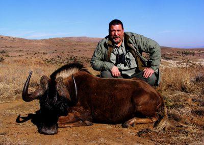 Black wildebeest shot placement