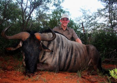 Hunting Africa wildebeest