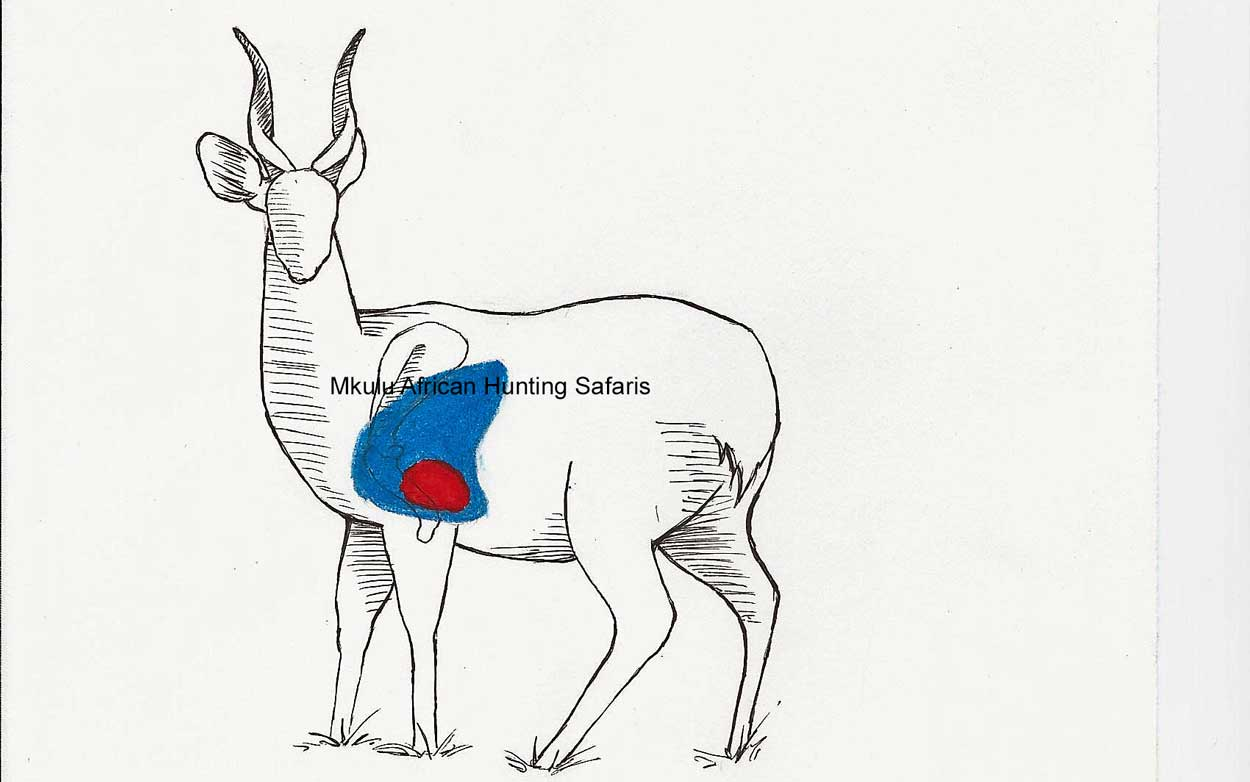 Deer Shot Placement Diagram - Wiring Diagram