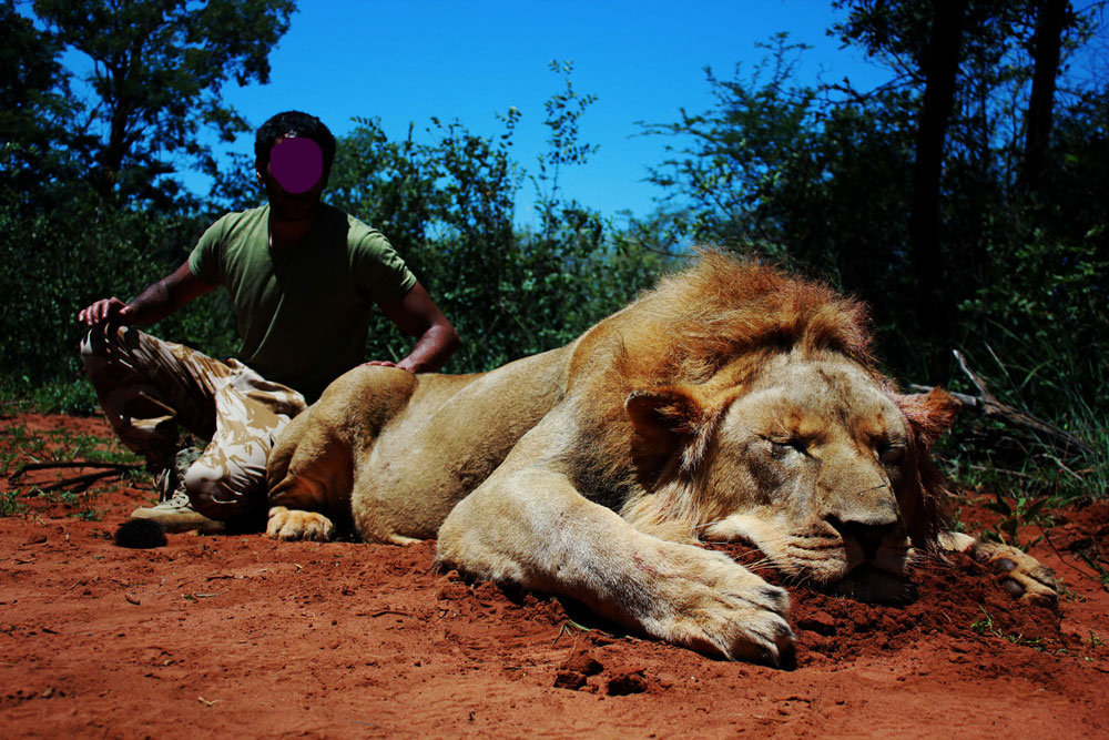 African lion hunting safaris