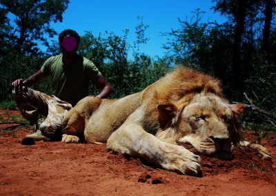 South African lion hunting in Africa