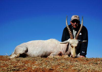 White blesbok hunting caliber