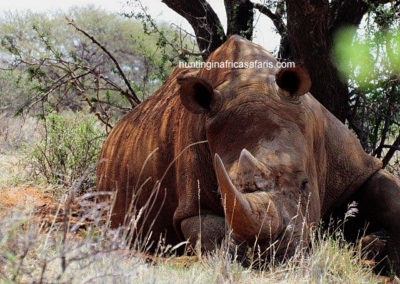 White rhino hunting packages South Africa