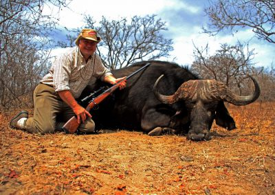 Hunting trophy animals of Africa Cape buffalo