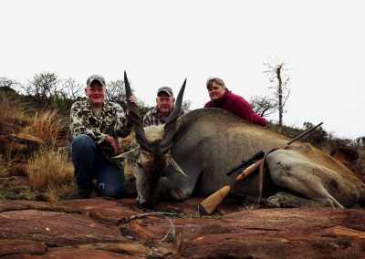 Hunting trophy animals of Africa eland