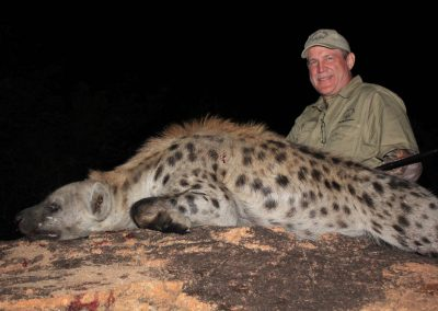 Hunting trophy animals of Africa hyena