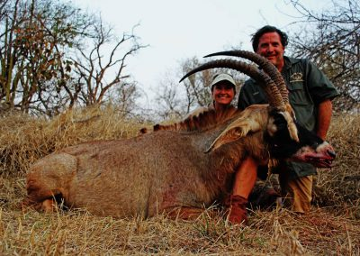 Hunting trophy animals of Africa roan antelope