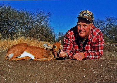 Hunting trophy animals of Africa steenbok