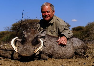 Hunting trophy animals of Africa warthog