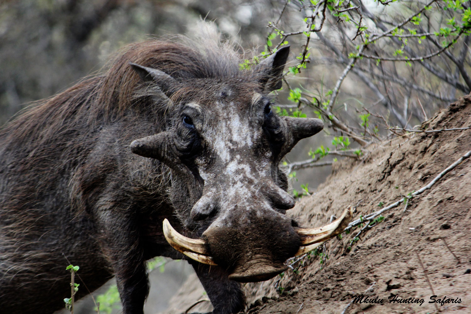 South African plains game hunting packages