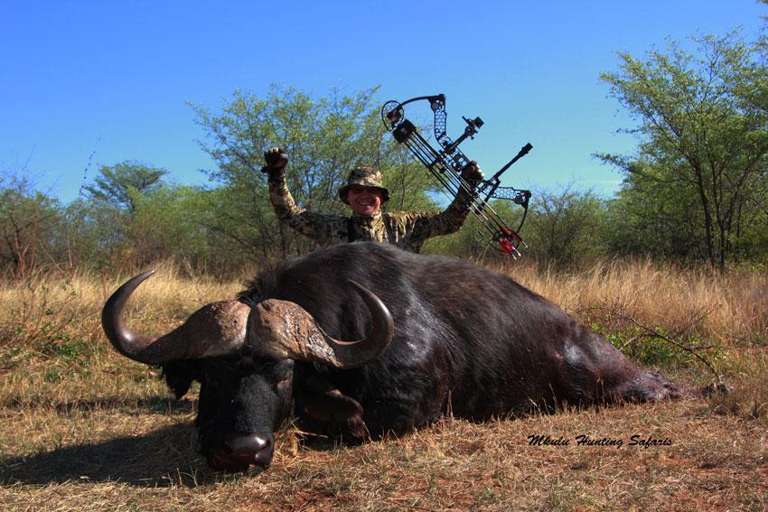 Bow hunting Cape buffalo