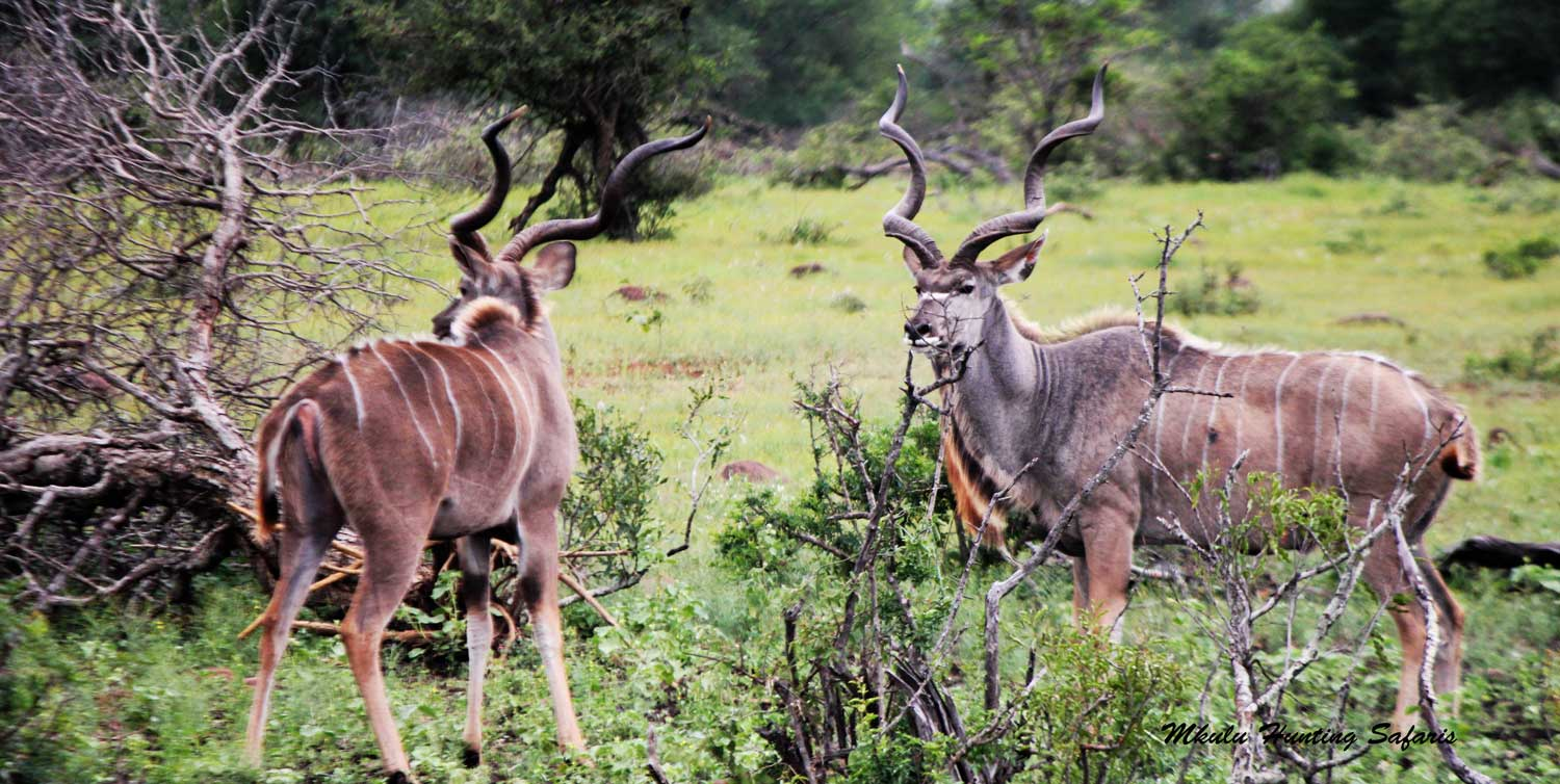 Bow hunting African plains game packages South Africa