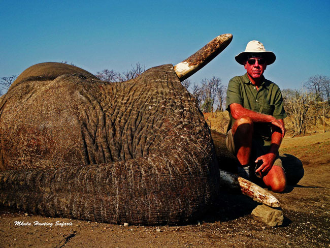 Trophy hunting elephants