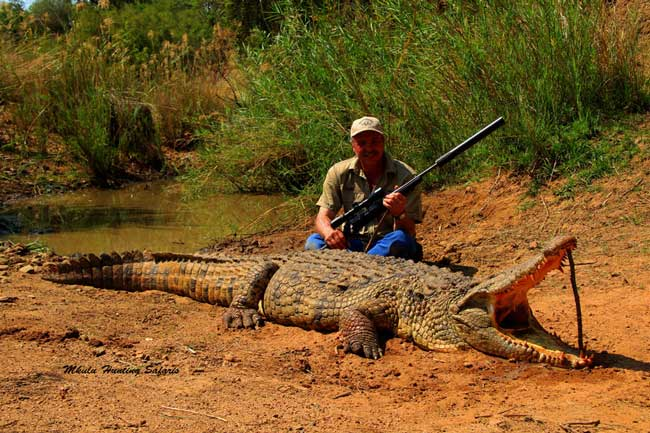Hunting crocodiles in South Africa