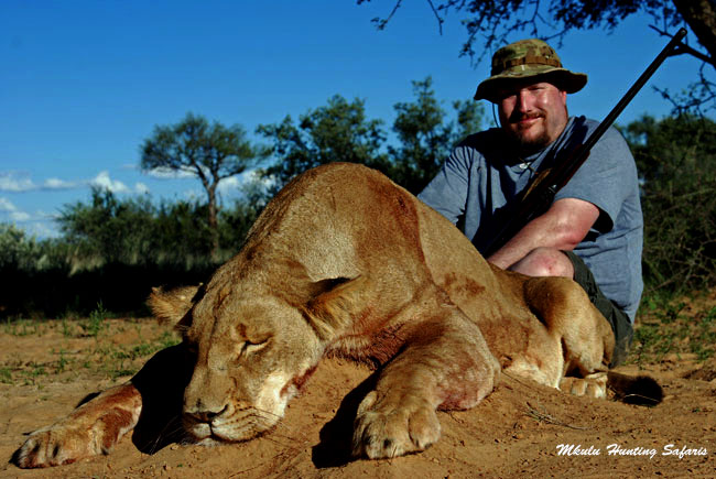 African lioness hunting package