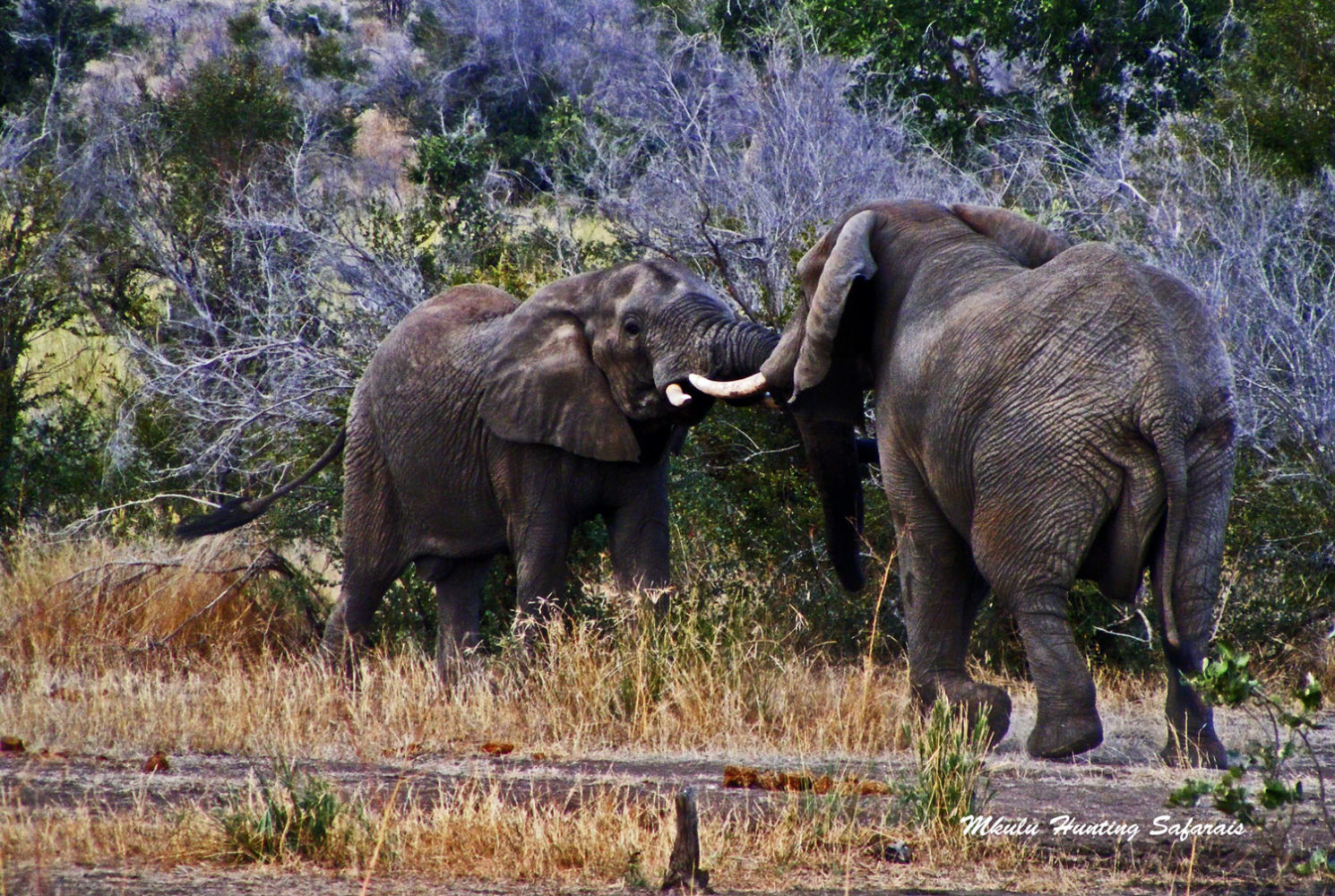 Hunting elephants South Africa