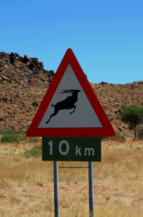 Kudu bow hunting