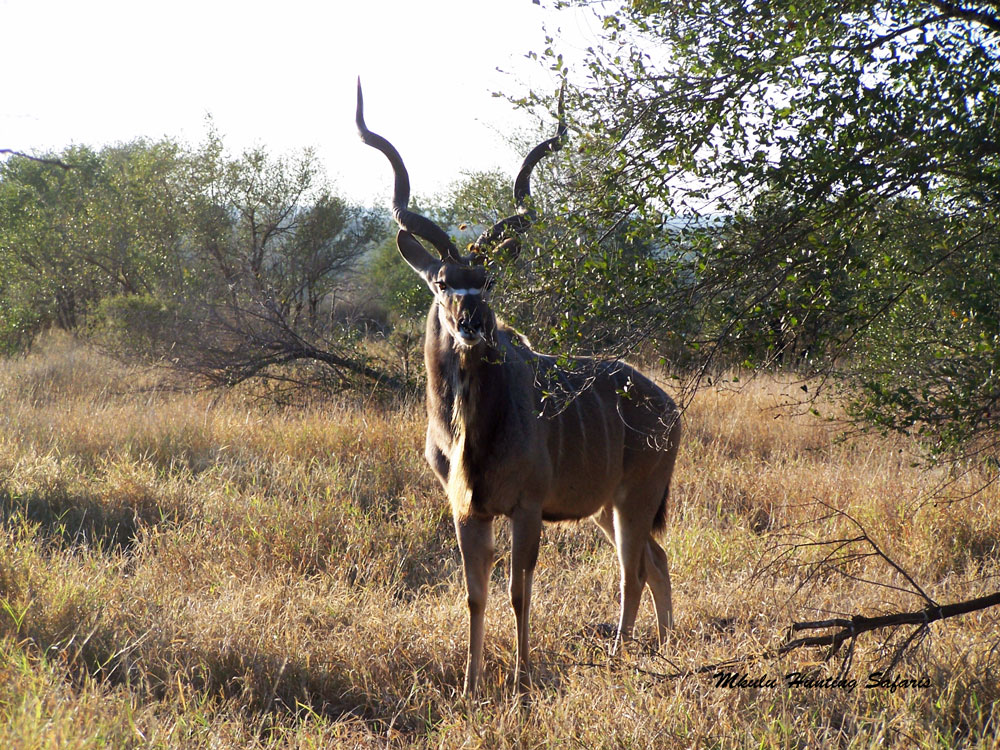 Kudu hunting packages South Africa cost