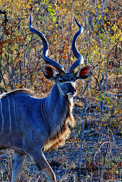 Kudu hunting packages South Africa prices