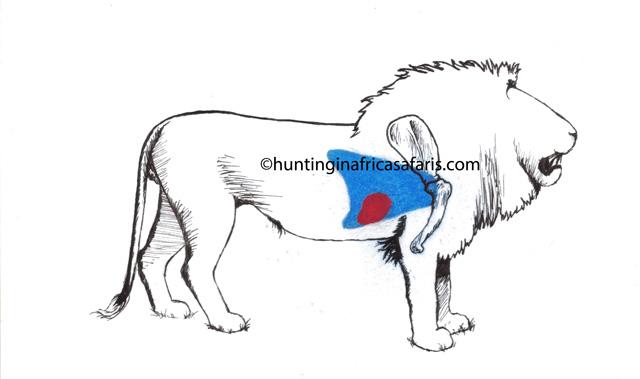 Lion hunting shot placement diagram