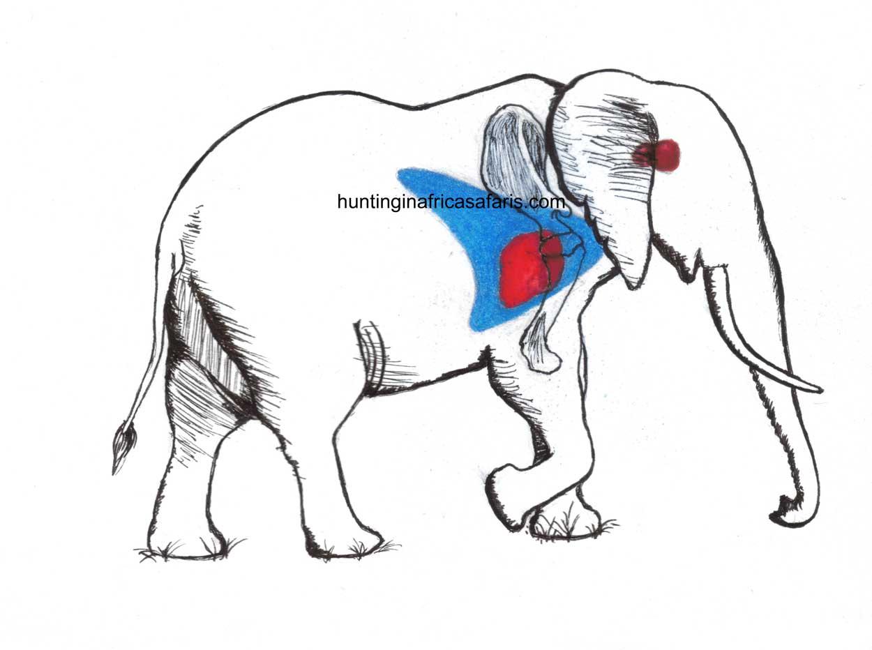 Elephant shot placement diagram