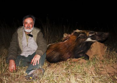 Hunting bushpig at night in South Africa