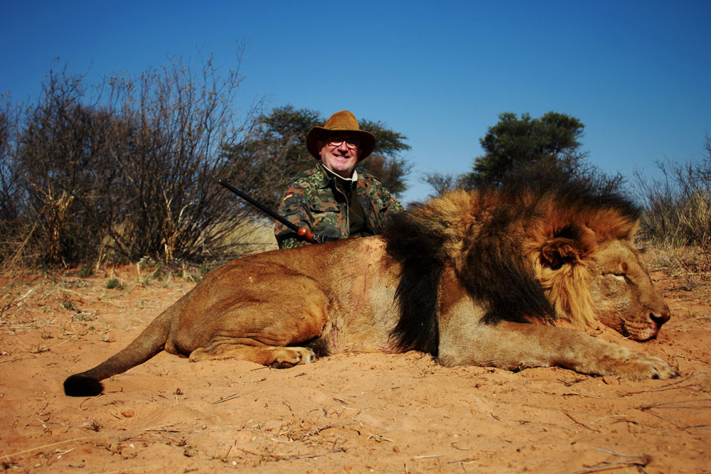 Hunting category 4 lions in South Africa