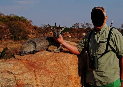 Klipspringer hunting in Africa