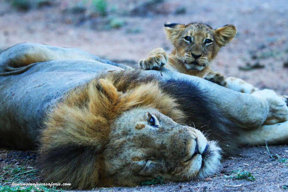 African wildlife photo safaris