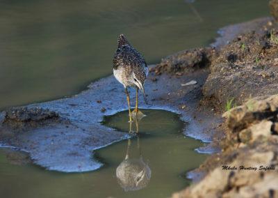 Bird reflection