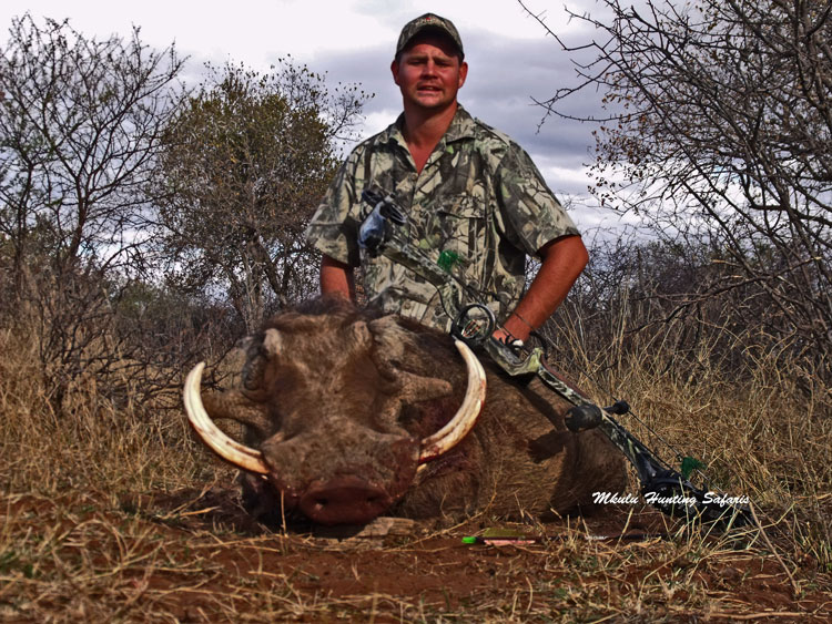 Bow hunting warthogs in South Africa