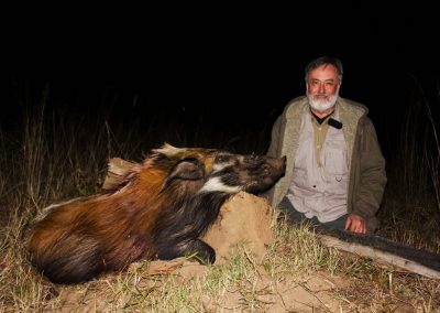 Hunting trophy animals of Africa bushpig