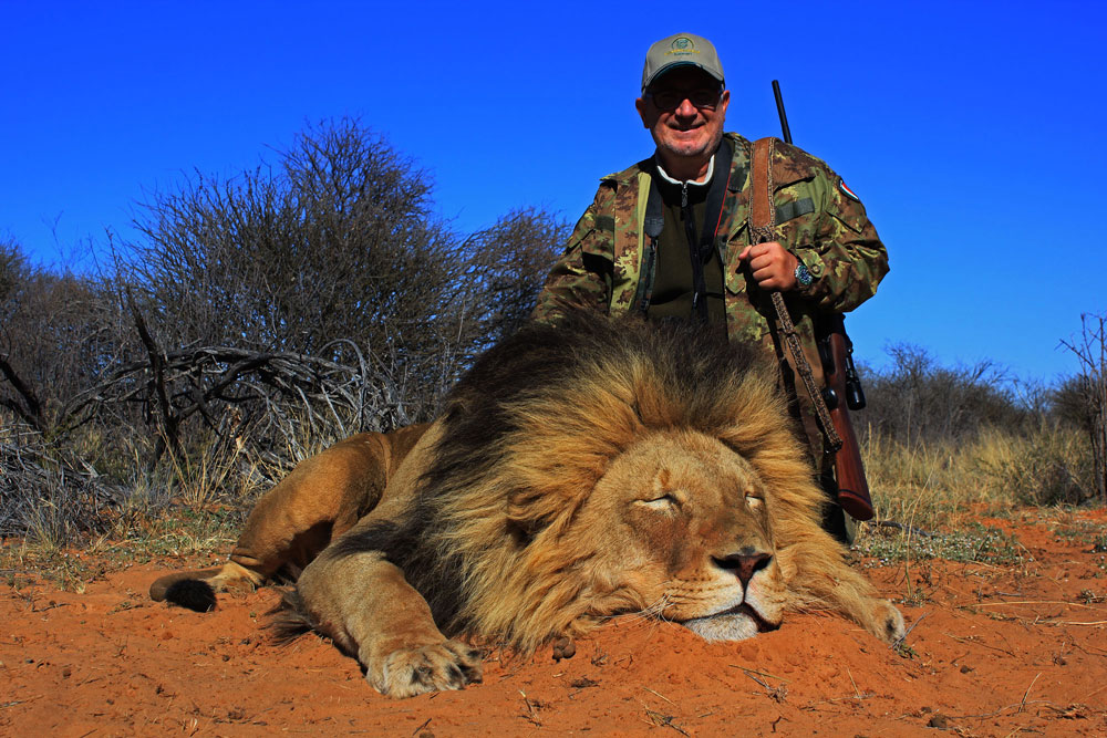 Lion hunting in South Africa
