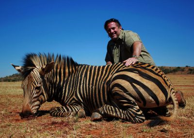 Hunting trophy animals of Africa mountain zebra