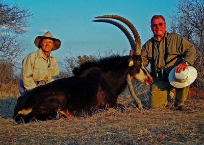 Hunting trophy animals of Africa sable