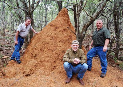 Termite mound in Africa