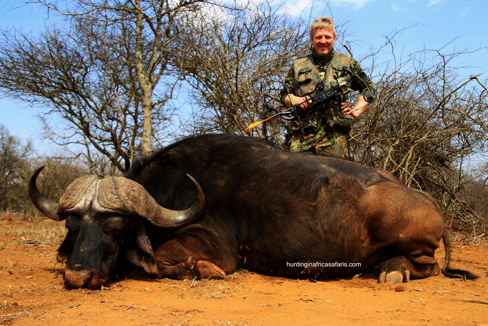 Bowhunting Cape buffalo