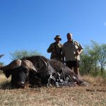 Bow hunting Big 5 Cape buffalo