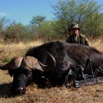 Trophy bowhunting Cape buffalo