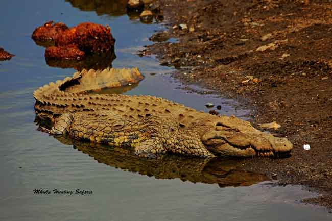 Crocodile bow hunting packages