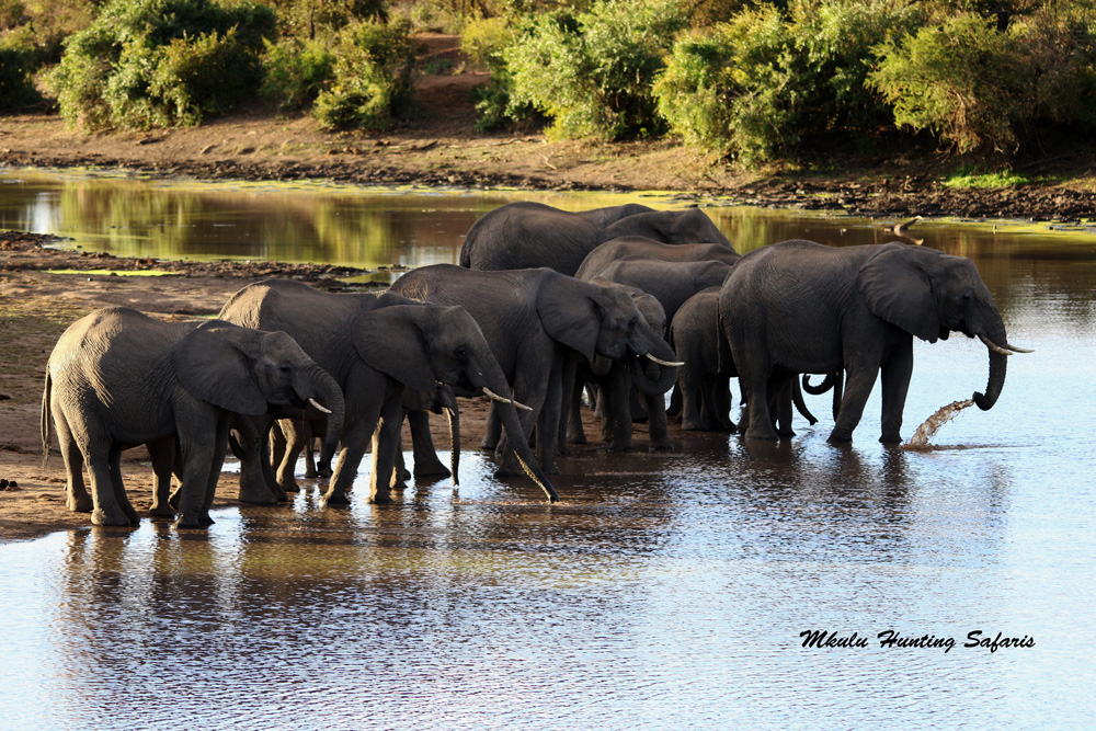 South African hunting safari prices