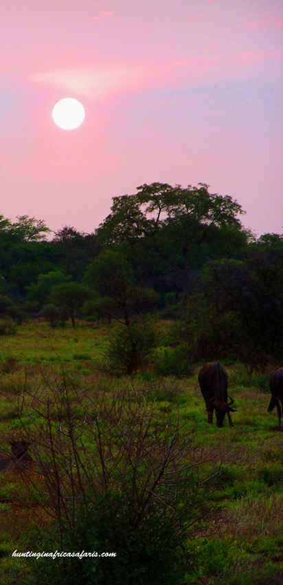 Hunting African plains game