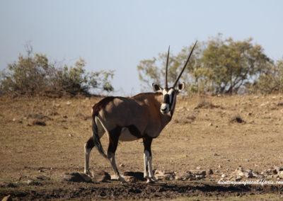 Hunting gemsbok South Africa caliber