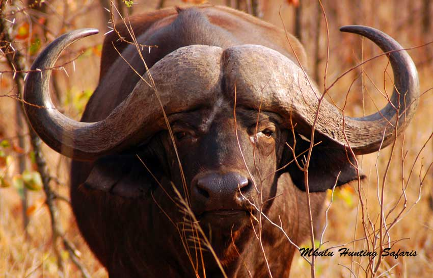 African dangerous game hunting packages
